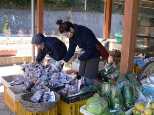 We buy farm products of season for many comfort for season