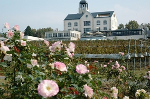 Nakaizu winery chateau T.S