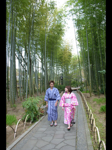 Narrow path (in spring) of bamboo forest