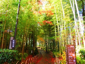 Narrow path of bamboo forest