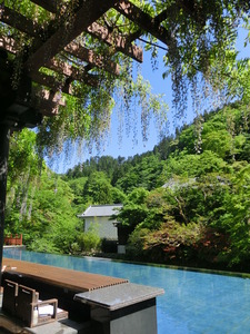 Footbath cafe that the fresh green and purple of wisteria are beautiful